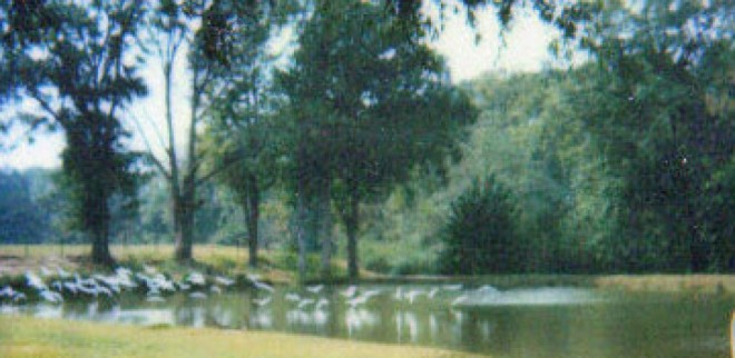 cropped-thepond1.jpg