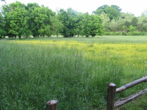 One of the sunny meadows.