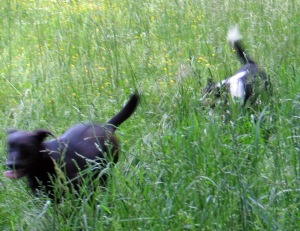 Samson and Snuggles have a blast at the cabin.
