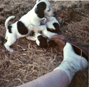 Puppies and toes in the late 1960s.