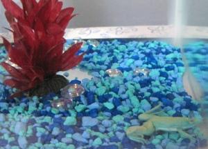 Hop Scotch's aquarium.