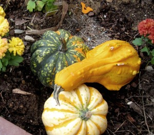 More gourds and chrysanthemums.