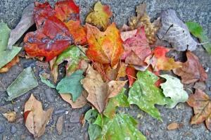 Beautiful fall leaves.