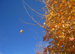 Wheeeee!  One little leaf goes fluttering to the ground.