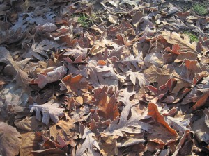 frost_leaves