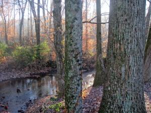 woods_creek