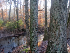 woods_creek