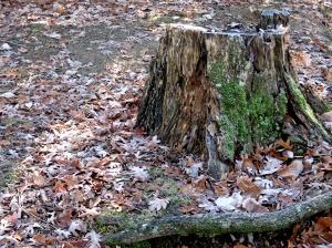 woods_stump