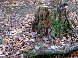 woods_stump
