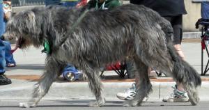 Irish doggies 2