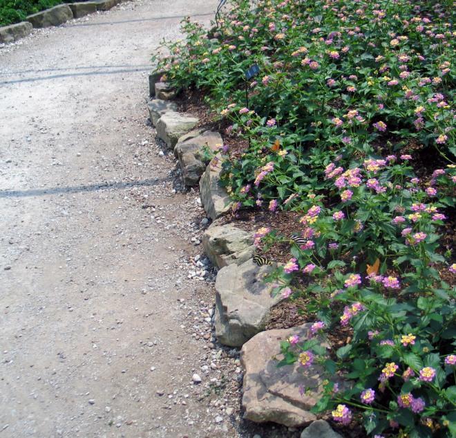 Spring flowers and butterflies at the Huntsville Botanical Garden.