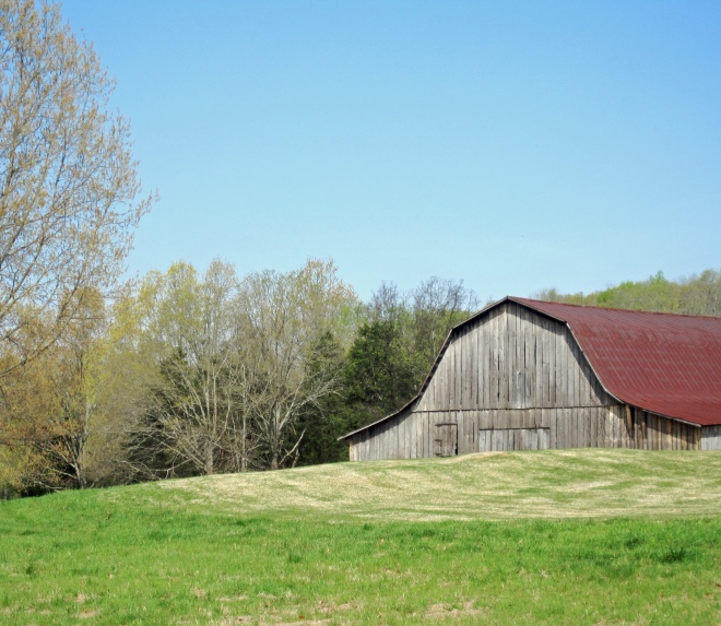"Old barn on Hampton Cove's golf course.  The HC course is part of the Robert Trent Jones Golf Trail.  I recently wrote an article about it in ""Life in Hampton Cove."""