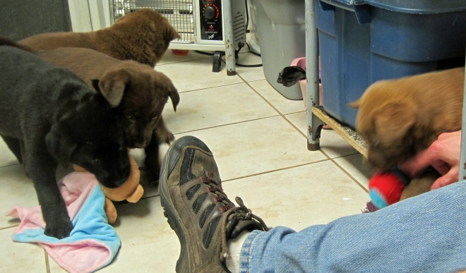 Puppy wants Lefty's right shoe.