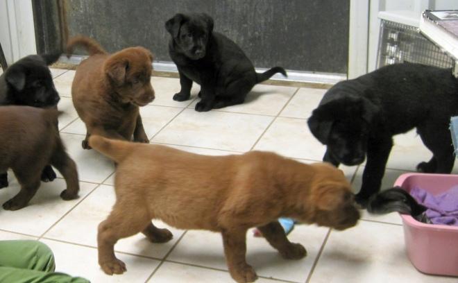 Puppies_everywhere