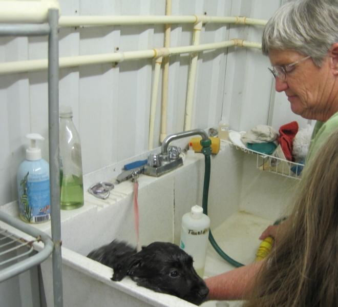 Laurie gives Spike a shampoo.