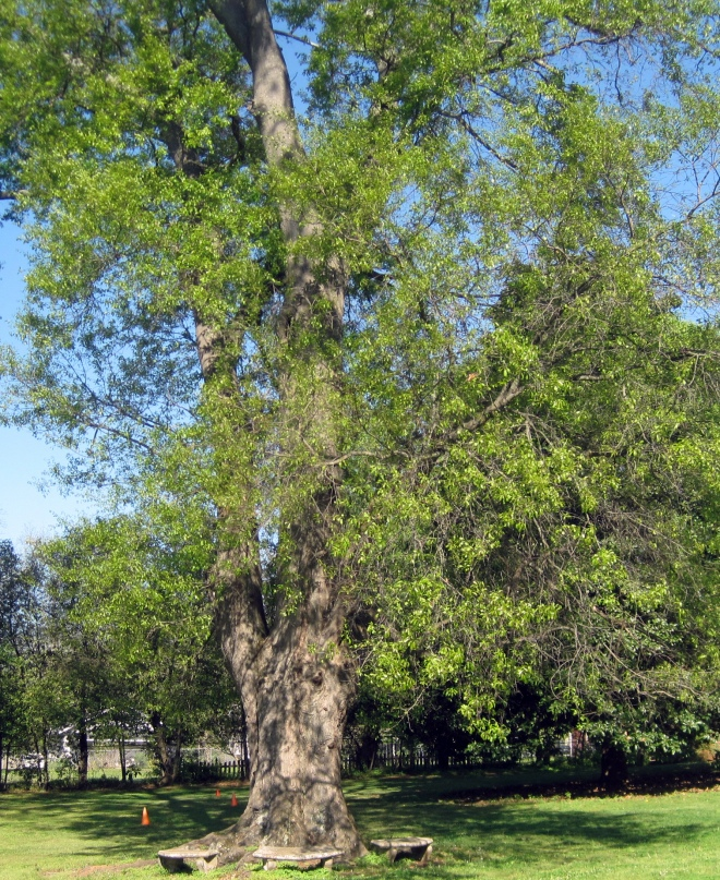 Huge oak in front yard.   Probably was around when Helen lived here.
