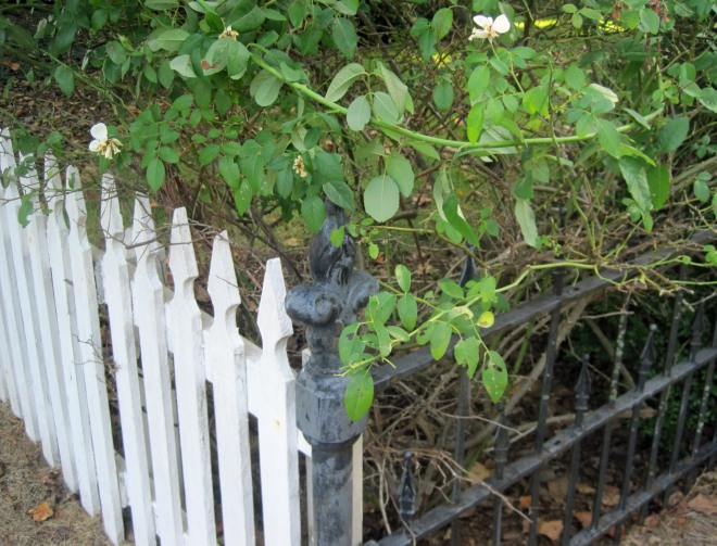 iron_fence2