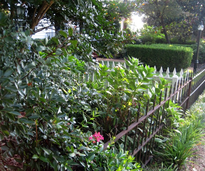 "Our yards usually don't look like a spread from ""Southern Living"" like this one does!"