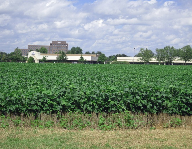 Agriculture meets high-tech on the skirts of Research Park.