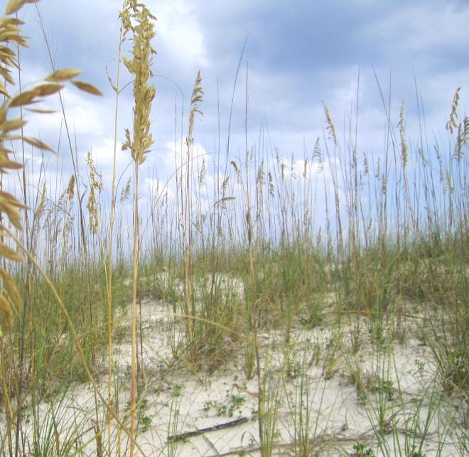 sand_dunes2014