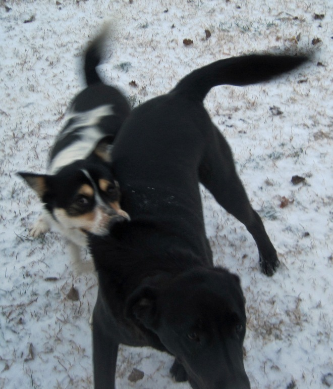 Snuggles and Spike play in the snow.