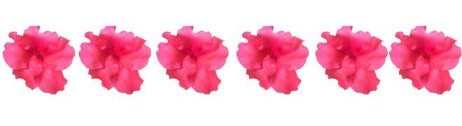 row_flowers