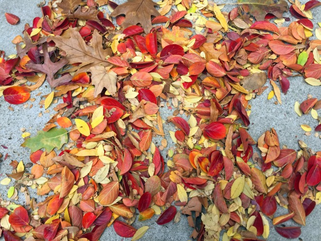 fall_leaves_2016