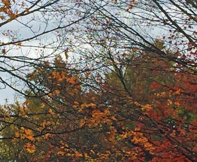 leaves_nov2016